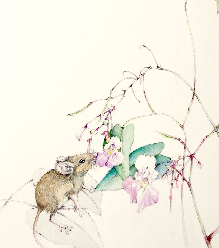 #acquerello#watercolor#natural sketch#maria sanfilippo#illustration#mouse#