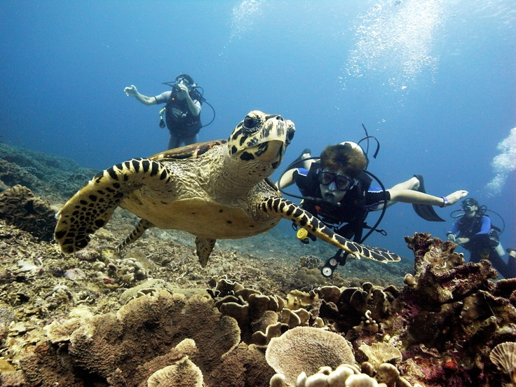 Get you picture taken with a turtle too: www.foued.biz - Diversia Diving Gili Trawangan Lombok Indonesia