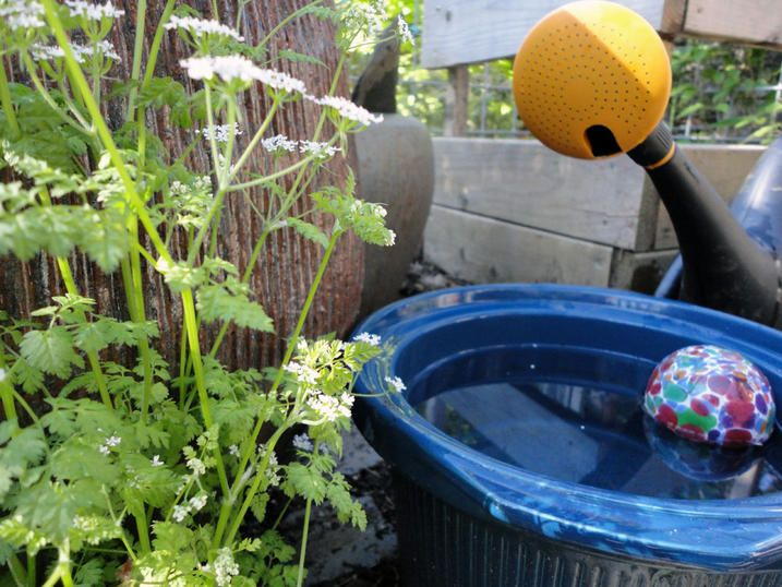 17 Best Images About Places In Your Yard Where Mosquitoes Are Probably Breeding On Pinterest
