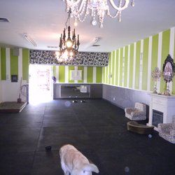 Bones Doggy Daycare - Pet Boarding/Pet Sitting - Foster City, CA ...