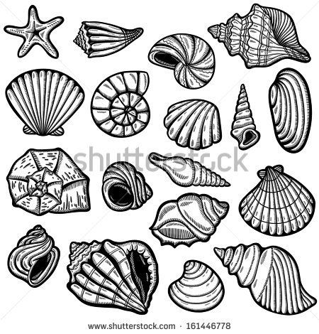 Black and white patterns of seashells | Large set of black&white graphic sea shells. Isolated objects on white ...