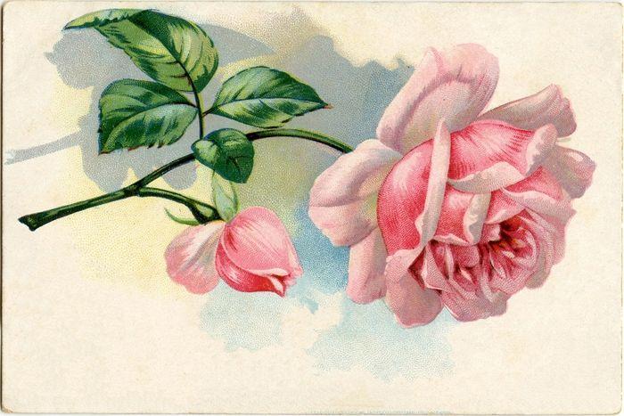 Винтажная роза открытка