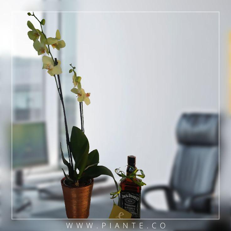 Se acerca la temporada de fin de año y #Piante te ofrece un regalo único, novedoso y elegante. Las variedades más exóticas de #Orquídeas #Phalaepnosis acompañadas de licores de excelente calidad. Pregúntanos por nuestros regalos corporativos. #RegalaVida #RegalaPiante. - http://piante.co/ - #Flores #Premium #Decoración #IdeasDeRegalos #Colombia #OrquídeasDeColombia #ColombianOrchids #Regalos #Regaloscorporativos