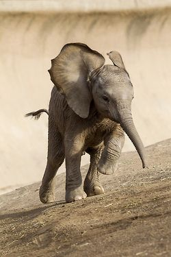 Sweet baby elephant. I keep having dreams about them, and I'm trying to figure out what it all means.