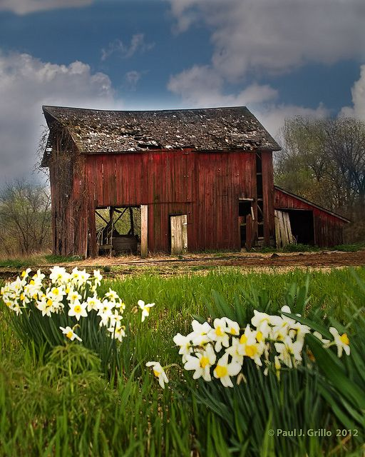 Spring Blossoms at the Barn
