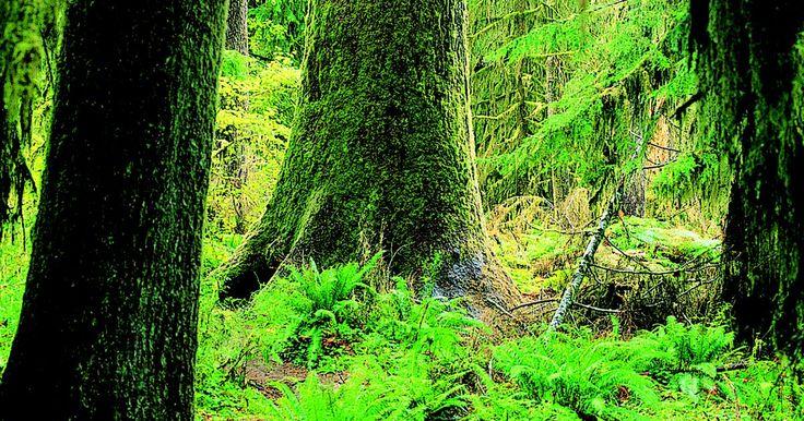 Relaciones simbióticas en la selva tropical. Las relaciones simbióticas existen entre las especies interdependientes en entornos compartidos, tales como las selvas tropicales. Estas relaciones se dividen en diferentes categorías. El mutualismo es una relación simbiótica que beneficia a ambas especies. En el comensalismo, la relación beneficia a una especie sin afectar a las otras. Las ...
