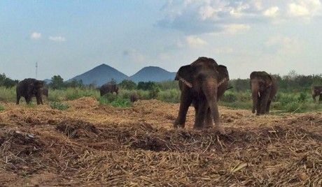 Popular Elephant Trekking Camp Ends Rides and Shows to Become a Sanctuary!
