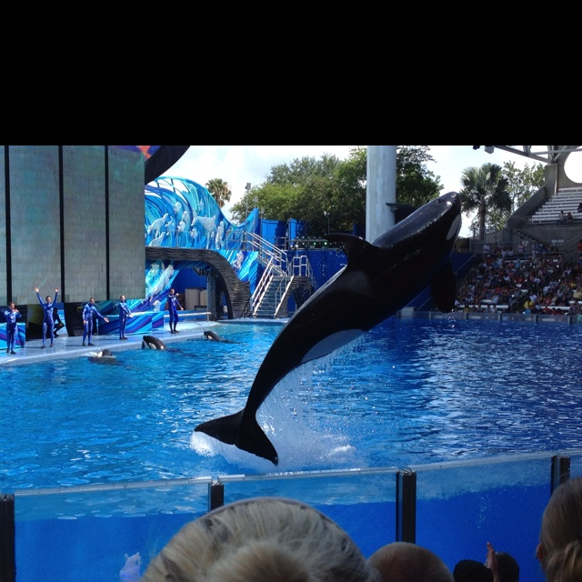 The blue water of Shamu's pool at Seaworld!
