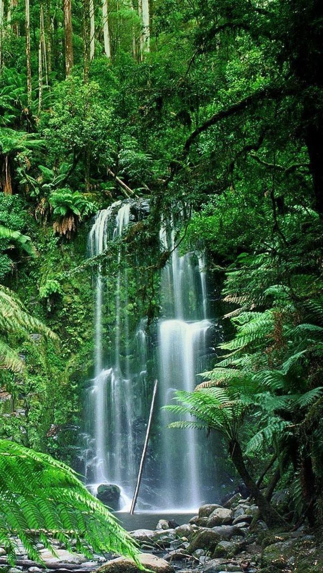 Beauchamp Falls, Victoria, Australia ~ Forest, Natural Beauty