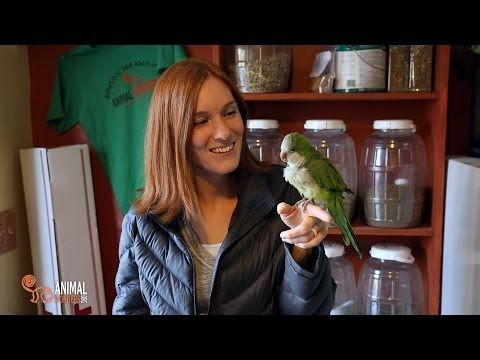 Rescued Monk Parakeet Has Amazing Vocabulary. Just Too Cute. - http://www.parrotshop.org/rescued-monk-parakeet/