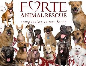 2 days left.  Please support at: http://tinyurl.com/Strut4Forte  Info on the event: FARescue.org/Strut