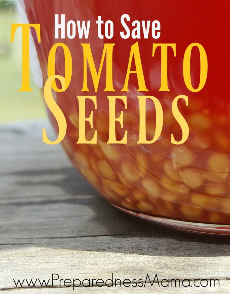 Heirloom seeds come back true. Once you know how to save heirloom tomato seed, you'll never have to purchase seed again.That's seed self-reliance!