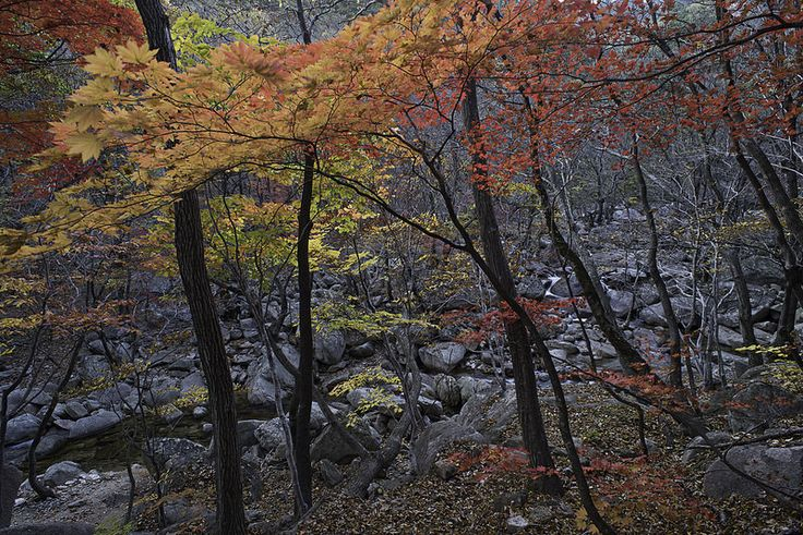 Soraksan National Park in various colors.  http://www.mattmacdonaldphoto.com