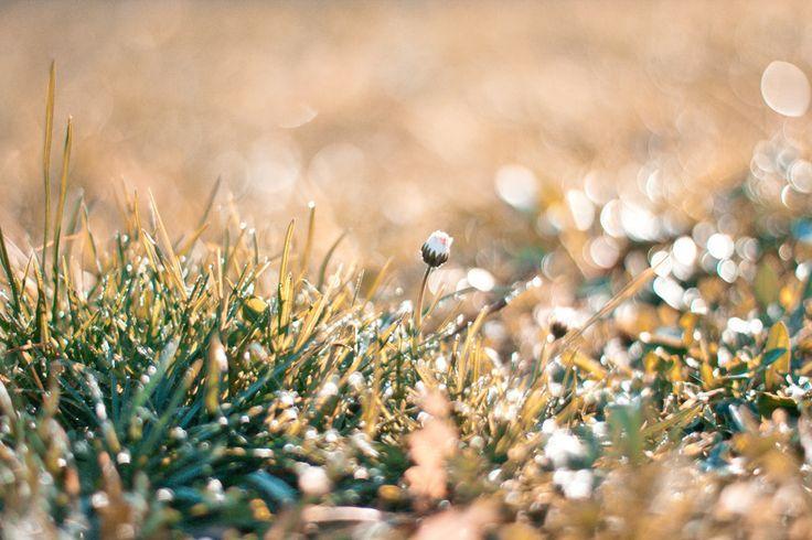 Spring melody by Petru Cojocaru on 500px http://500px.com/photo/65064593 https://www.facebook.com/bypetrucojocaru