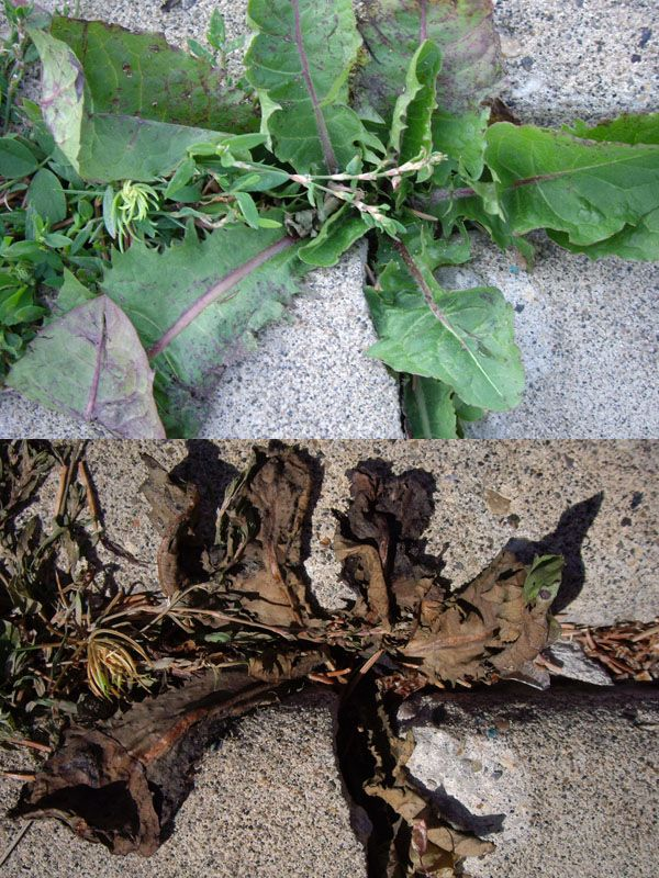 What Can You Use To Kill Weeds Naturally