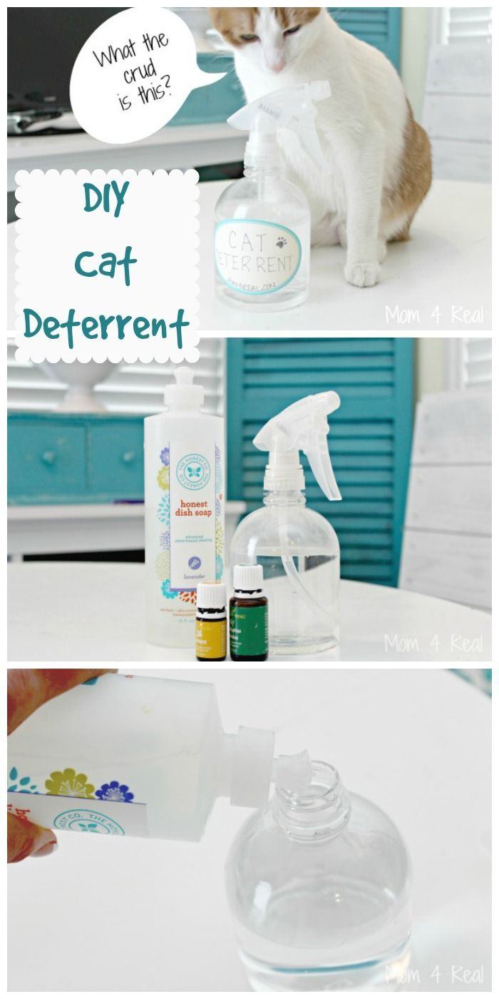 DIY cat deterrent! Stop your cat from urinating on or scratching household surfaces.