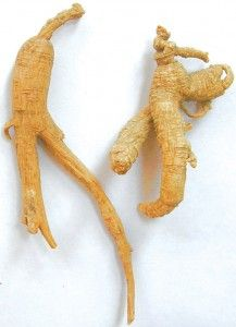 Korean Ginseng has a very positive effect in making the whole body healthy. If you take it daily, it can balance all of the systems in the body and make you healthier.    Korean ginseng has been used to lower cholesterol, reduce stress, decrease stress and boost energy, treat diabetes, treat depression and sharpen the mind and memory. It is a herb that really does a lot for you.