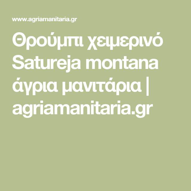 Θρούμπι χειμερινό Satureja montana άγρια μανιτάρια | agriamanitaria.gr