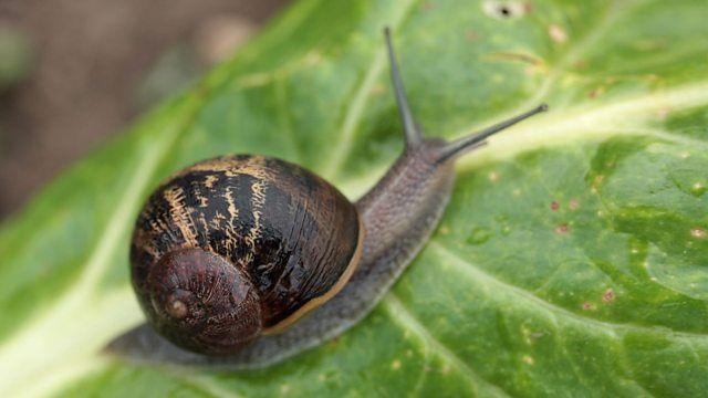 Garden Snail Snail Snails In Garden Vancouver Art Gallery
