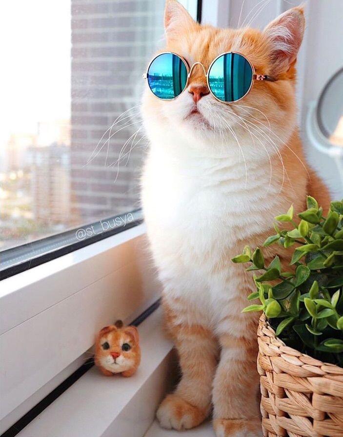 Cute Cat Glasses Bayi Kucing Kucing Bayi Kucing Dan Anak Kucing Cat wearing glasses wallpaper hd