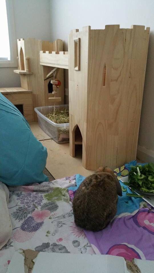 Bunny castle                                                                                                                                                                                 More
