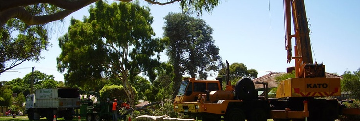 Looking for a tree pruning service company in Australia?