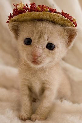 kittens are just the cutest! So fragile, vulnerable, sweet!: Kitty Cats, Easter, Sweet, Animal Funnies, Pearls, Straws Hats, Adorable Kittens, Teas Party, Kentucky Derby