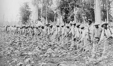Convicts Sent to Work on Plantations    In December of 1900, the Board of Control of the Louisiana State Penitentiary held a meeting in w...