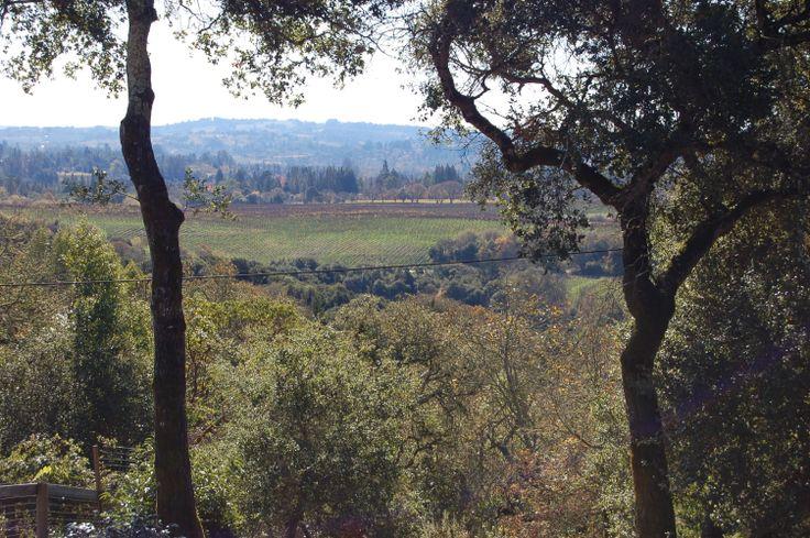 Vineyards, Forestville, CA