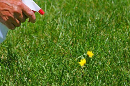 Kill weeds, not your garden plants.