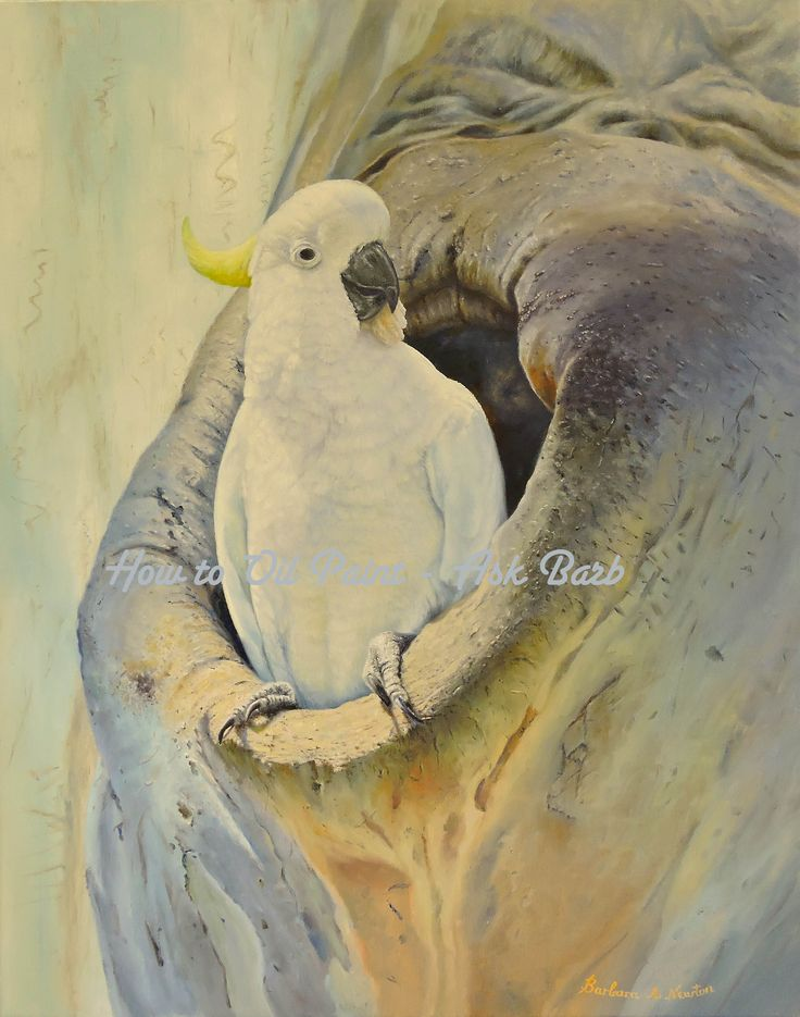 """""""How to Oil Paint a Cockatoo"""" by Barbara Newton"""