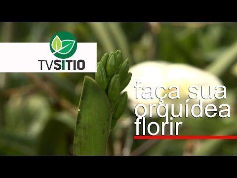 TRATAMENTO PARA FAZER A SUA ORQUÍDEA FLORIR - YouTube