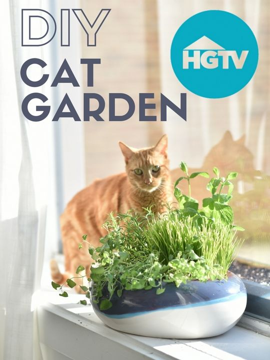Watch: How to Plant a Container Garden for Your Cat>> http://www.hgtv.com/videos/how-to-plant-a-cat-garden-0261911