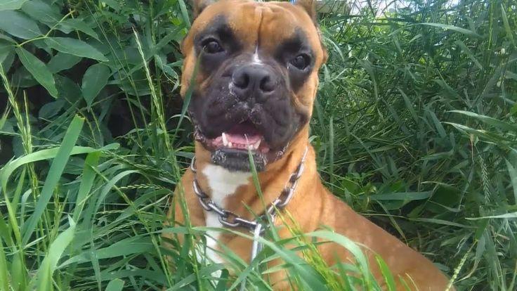 СОБАКА ЧИХАЕТ НА КАМЕРУ НА СЪЕМКАХ ВИДЕО Смешные собаки чихают Будьте зд...