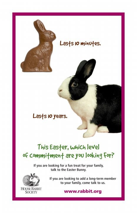 26 best easter bunny stuffed not real buns images on pinterest flat bonnie the bunny says real buns are not easter gifts negle Gallery