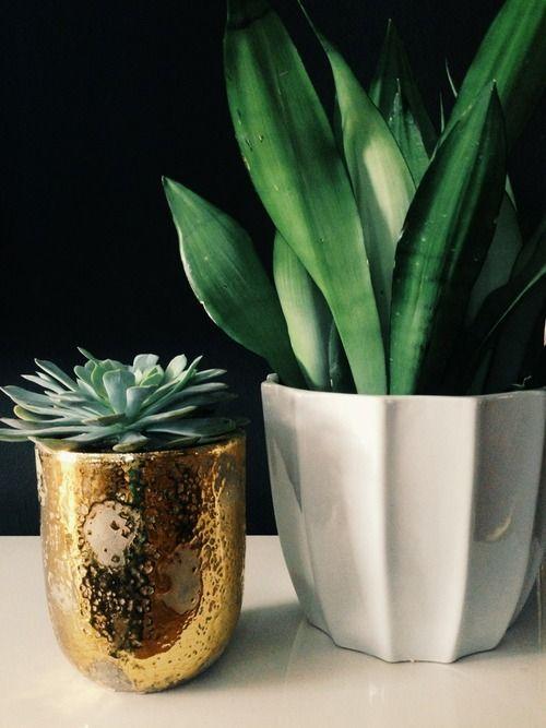 Potted Plants plants interiordesign realestate · Indoor GardeningIndoor PlantsGardening TipsPot
