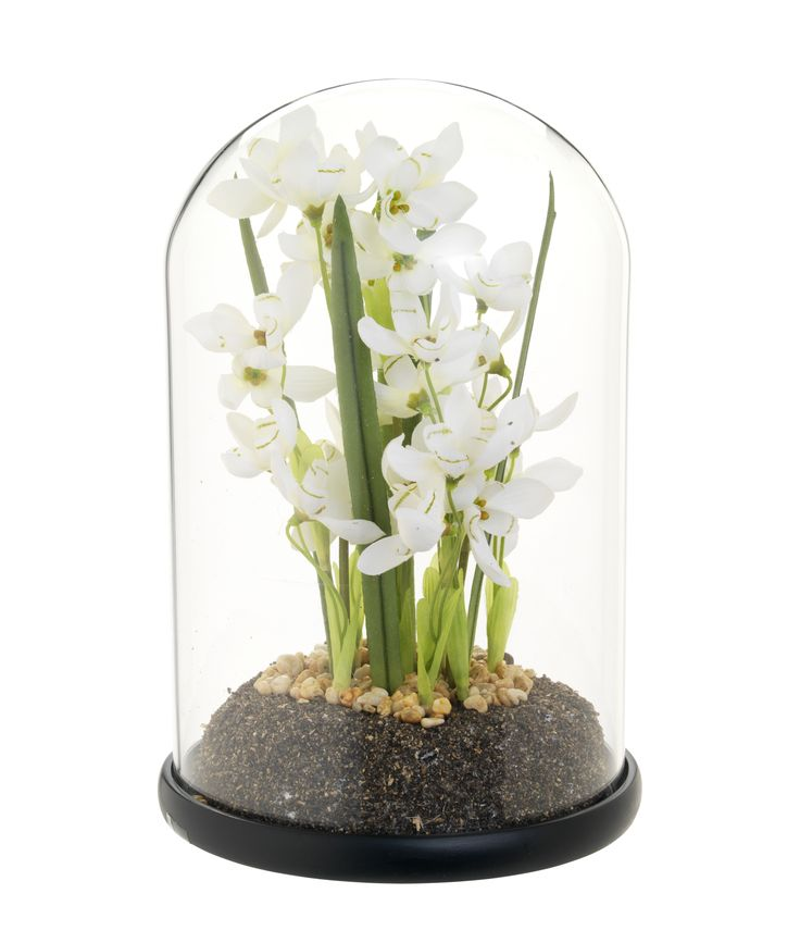For ever-lasting blooms try this pretty cloche snow drop display – a unique focal point for your living room or bedroom. Priced at £16