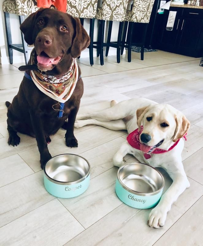 Custom Bowls From Yeti Dog Bowls Best Dogs Dogs