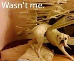 Afbeeldingsresultaat voor grappige honden met tekst