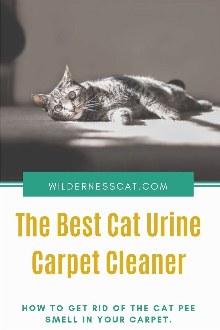 Best Cat Urine Carpet Cleaner How To Get Rid Of The Cat Pee Smell Cat Urine Cat Pee Smell Cool Cats