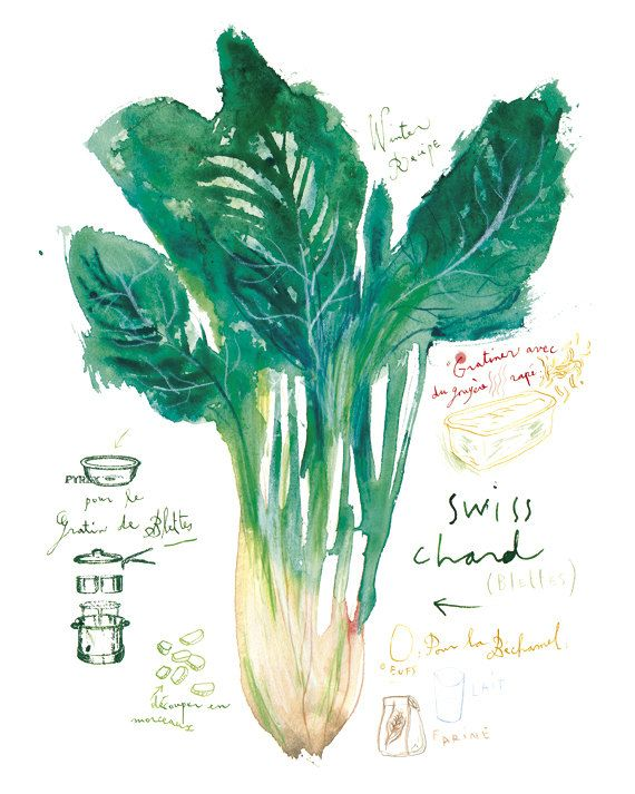 Swiss chard poster, Vegetable print, Green kitchen decor, Watercolor painting…