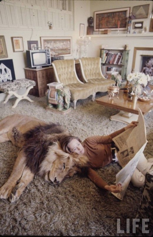 Tippi Hendren (Melanie Griffithu0027s Mom) With The Families Pet Lion In Their Living  Room Part 58