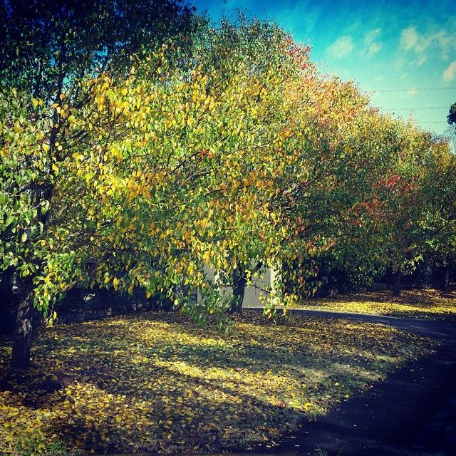 Dural in Autumn #dural #autumndural