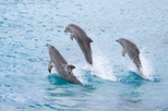 Half-Day Dolphin Island Tour from Punta Cana, Punta Cana, Swim with Dolphins