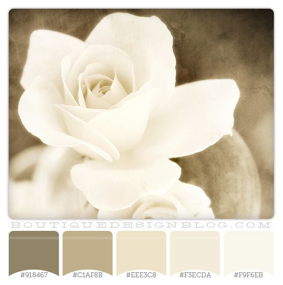 cream, gray and brown color schemes | Warm Vanilla Natural color scheme | Boutique Design Studio
