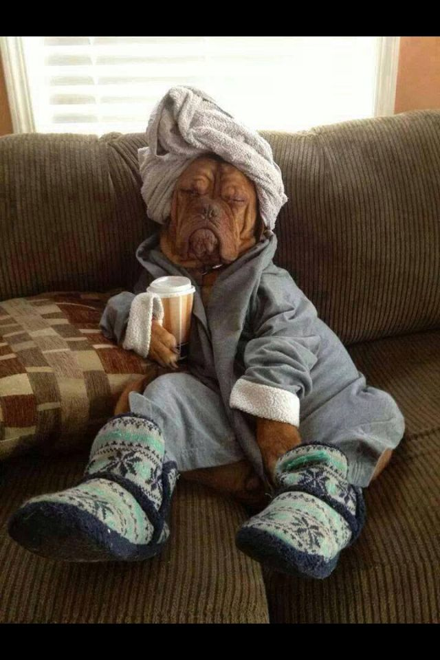 Lazy Friday.... Every women's dream! | •memes• | Funny ...