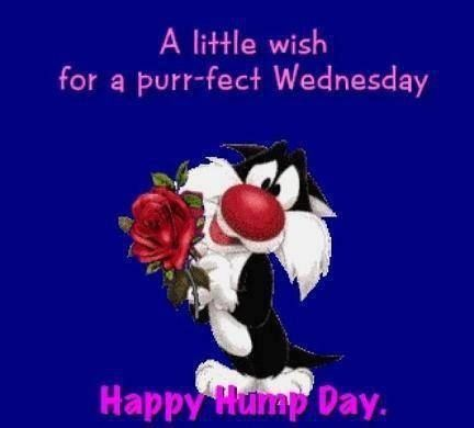Happy Hump Day quotes quote looney toons days of the week sylvester wednesday humpday wednesday quotes