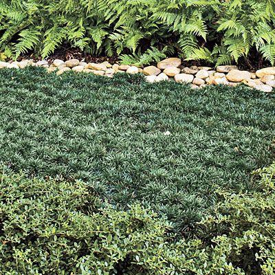 61 best low maintenance lawn images on pinterest for Best low maintenance grass