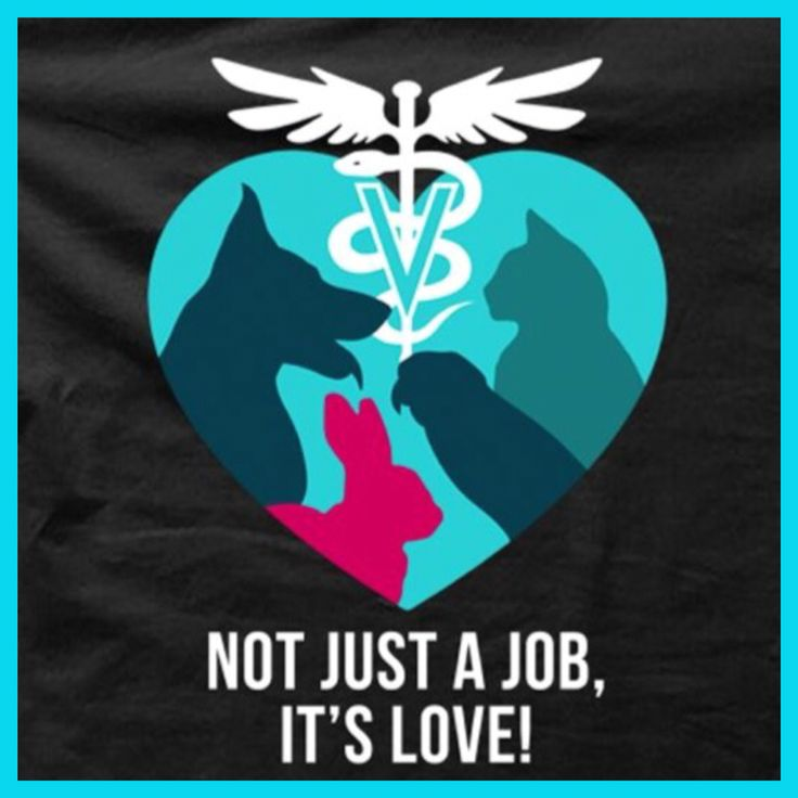 @beyjess12 // Veterinary medicine is all about love.