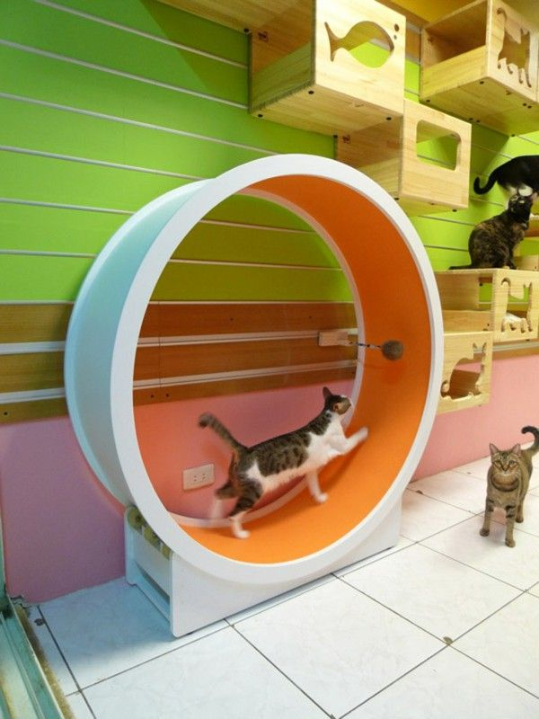 Cat climbing wall with movable wheel
